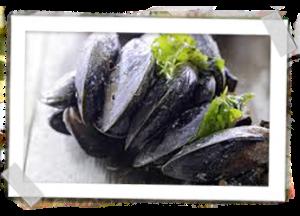 Zeeuwse-Bodemcultuurmosselen