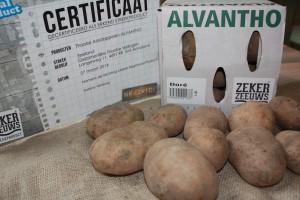 ALVANTHO Aardappel